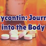 journey-into-the-body-1