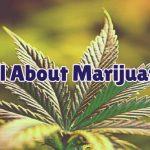 all-about-marijuana-1
