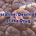 mescaline-1